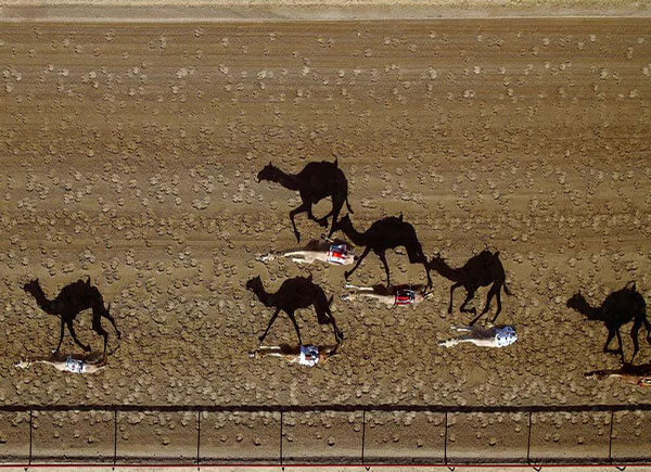 Camel Race Aerial Photography